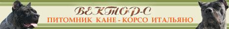 Питомник Кане-Корсо Итальяно & Южноафриканский БУРБУЛЬ Вектор-С
